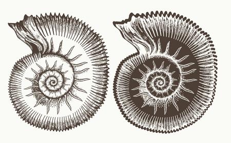 Ancient ammonites mano dibujado vector. Gran arqueología de la cáscara de amonita y concepto paleontológico Foto de archivo - 76591645