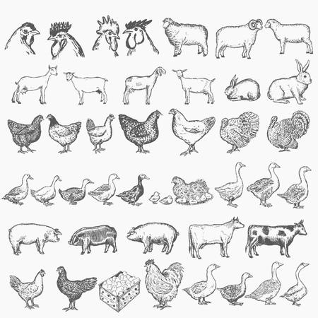 Wektor zbiory zwierząt gospodarskich. Ręcznie rysowane zestaw zwierząt gospodarskich Ilustracje wektorowe