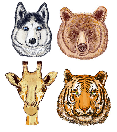 動物を設定します。キリン、熊、犬、虎。手描きの野生動物に直面します。キリン、熊、犬、虎ベクトル