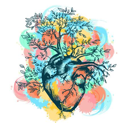 Anatomische menselijk hart van waaruit de boom groeit spatten van aquarel vector illustratie