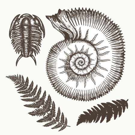 Archeology and paleontology. Prehistoric art. Most ancient minerals Ancient ammonites fern, trilobite hand drawn vector. Great ammonite shell archeology art