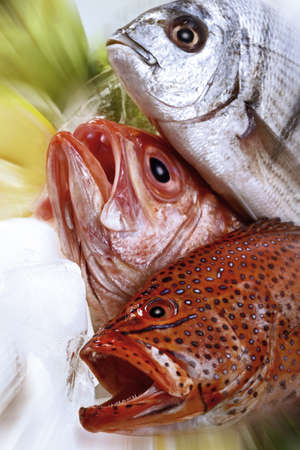foodstill: grouper, Red Snapper and seabass