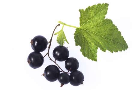 foodstill: black currants LANG_EVOIMAGES