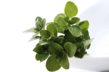 foodstill: Oregano Origanum vulgare