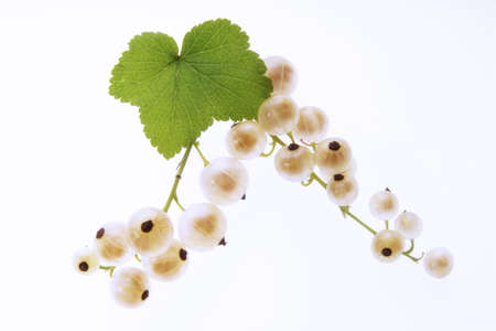 foodstill: white currants LANG_EVOIMAGES