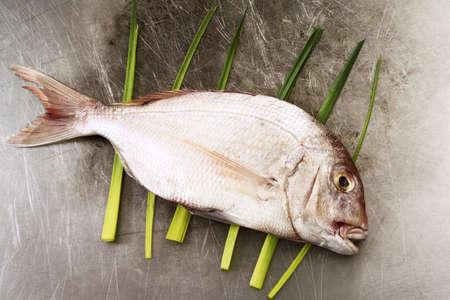 gilthead: fresh gilthead