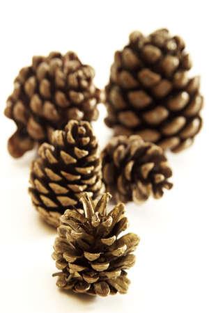 quintet: Pine cones LANG_EVOIMAGES