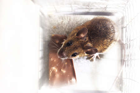 mouse trap: Mouse in a trap LANG_EVOIMAGES