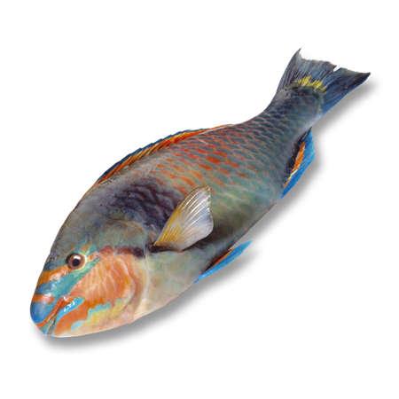 seafish: Parrotfish, elevated view