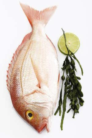 seafish: Fresh fish, gilthead with seaweed LANG_EVOIMAGES