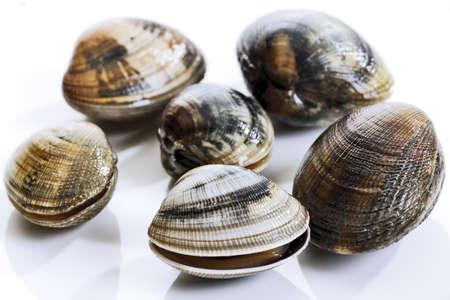 molluscs: Fresh mussels