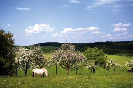 Horses grazing in fruit field LANG_EVOIMAGES