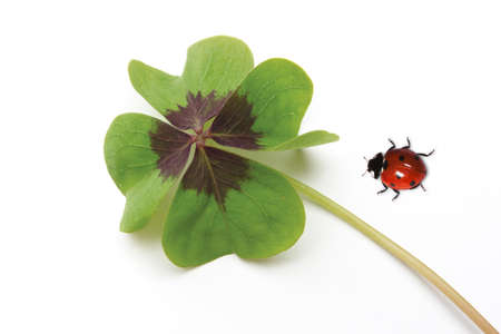 fourleaved: Ladybird and four-leaved clover
