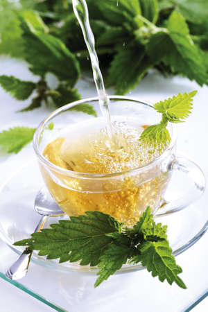 Stinging nettle tea Stock Photo - 23707648