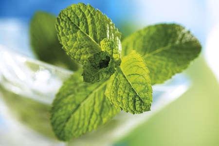 foodstill: Spanish Mint, Mentha spicata