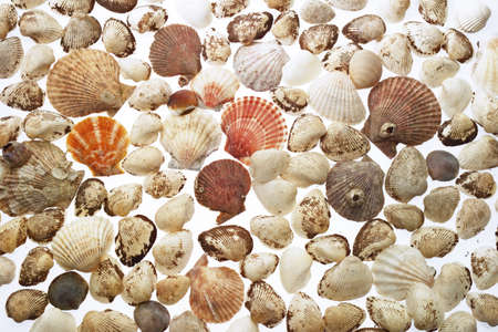 elevated view: Sea shells,elevated view,close-up