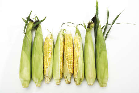 juxtaposing: Fresh corncobs LANG_EVOIMAGES