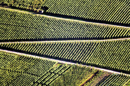scenaries: Germany, winegrowing near Mosel river
