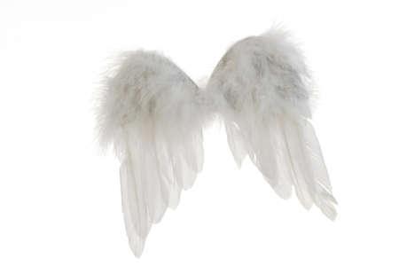 angel wings: Angel wings