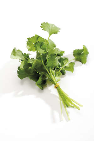 Coriander, cilantro, close-up