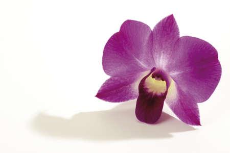 orchidaceae: Orchid blossom (Orchidaceae), close-up LANG_EVOIMAGES