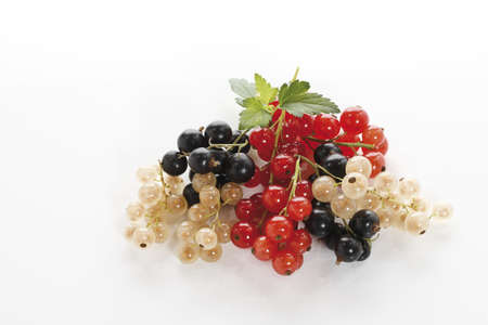 elevated: Currants, elevated view