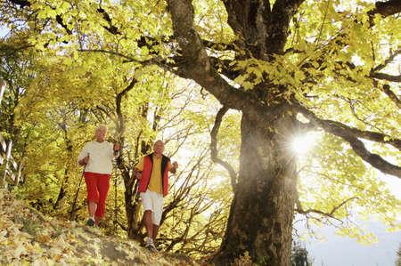 elder tree: Senior couple Nordic walking, low angle view