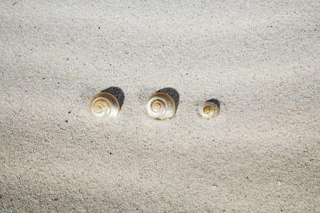 juxtaposing: Sea-snail shells in sand