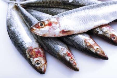 sardinas: Sardinas frescas  LANG_EVOIMAGES