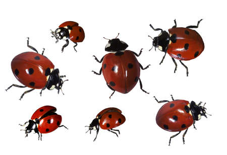 auspiciousness: ladybirds