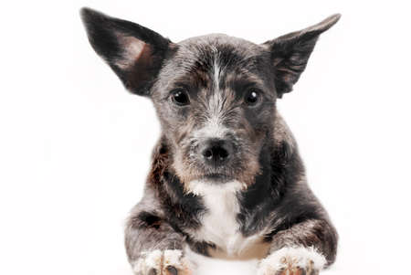 confiding: Portrait of sitting mixed breed dog, close-up