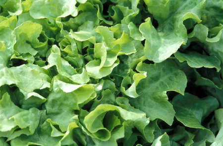 foodstill: green salad