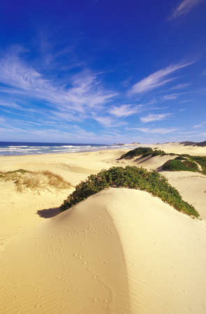 lonliness: Sanddunes at Buchmans River Mouth, Port Alfred, Eastern Cape, South Africa