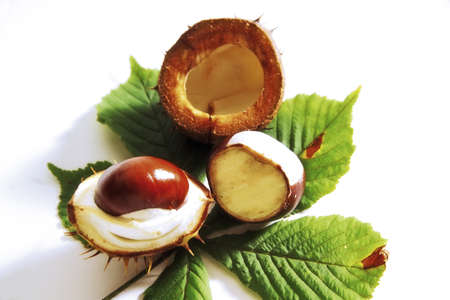 aesculus hippocastanum: Horse Chestnuts, Aesculus hippocastanum LANG_EVOIMAGES