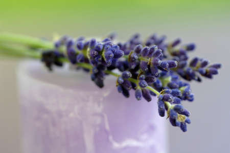 auras: Lavender flowers on candle, close-up