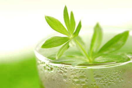 woodruff: Glass of woodruff tea, close-up