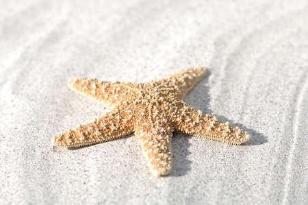 seafish: Seafish on sand, close-up