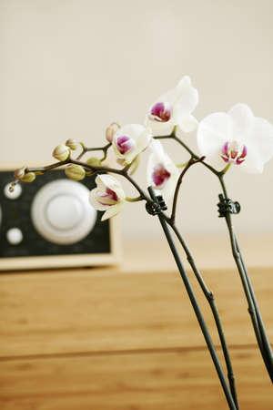 temperature controller: Orchid against temperature controller LANG_EVOIMAGES