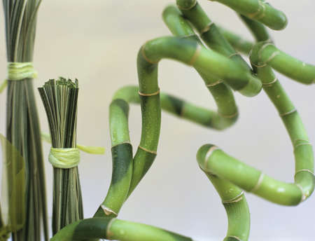 carex: Annulated bamboo with grass bunches LANG_EVOIMAGES