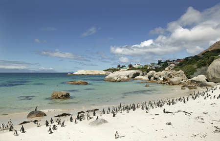 penguin colony: South Africa, Cape Town, penguin colony on beach LANG_EVOIMAGES