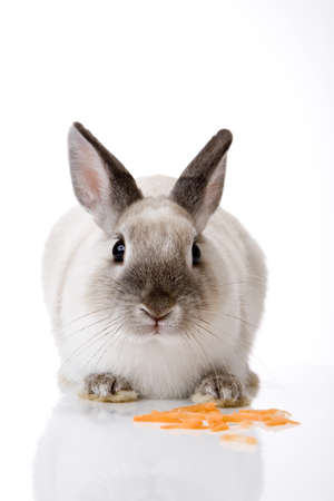 eyecontact: Bunny with carrot slices LANG_EVOIMAGES