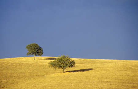 lon: Tree and field, Toscana, Italy LANG_EVOIMAGES