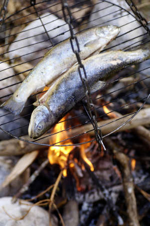 elevated view: Trout on grill at campfire, close-up, elevated view