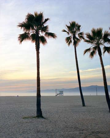 auspiciousness: USA, Palms on Los Angeles beach