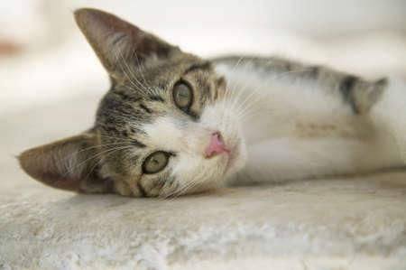naxos: Greece, Naxos, cat lying on floor