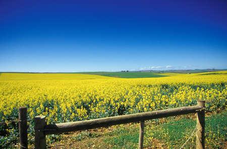 rsa: fields near Heidelberg, Western Cape, Overberg, South Africa