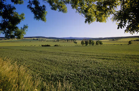 scenaries: Fields in Marksuhl, Thuringia, Germany LANG_EVOIMAGES