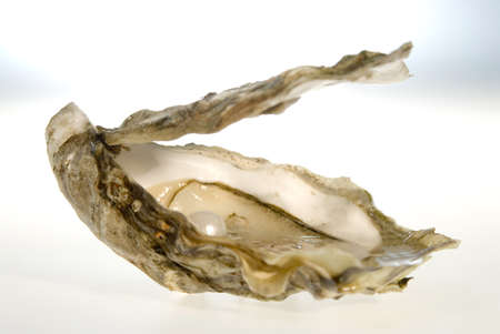 close p: Pearl in oyster, close-up
