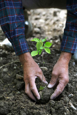 unrecognisable person: Hands Planting a Seedling closeup