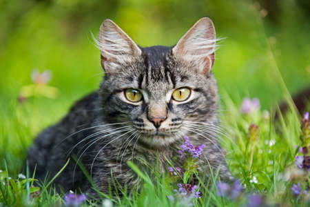 Cat in meadow LANG_EVOIMAGES